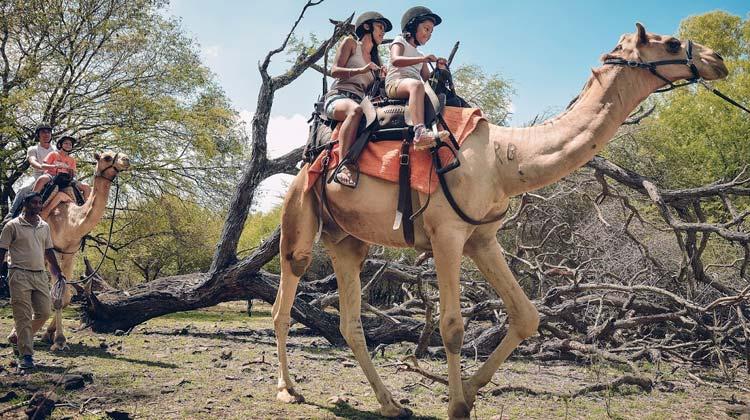 Casela Camel Riding