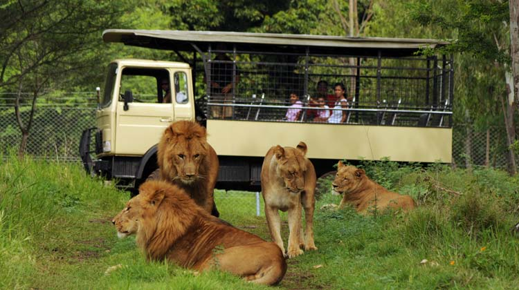 Casela Safari