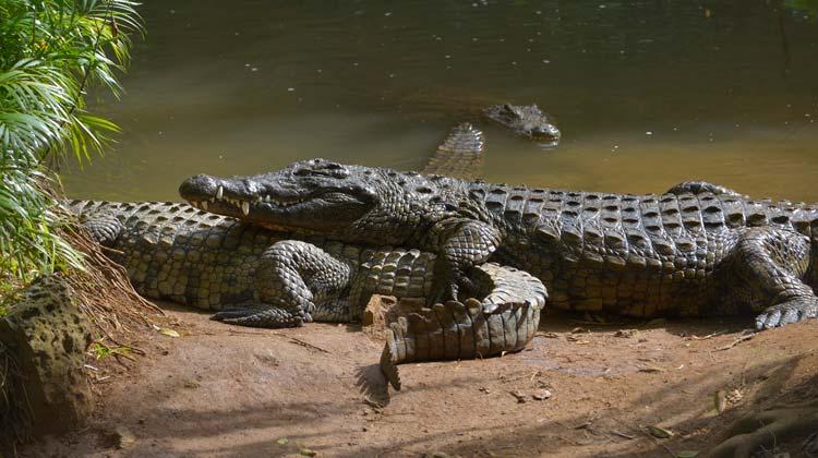 La Vanille Nature Park Crocodile