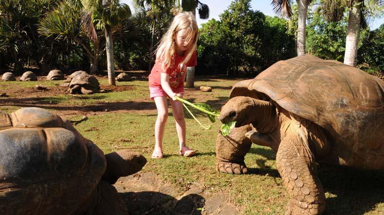 La Vanille Nature Park Tortoise